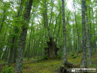 Castañar de El Tiemblo; viajes de montaña; viajes culturales desde madrid;tiendas de alpinismo en